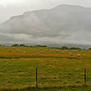 New Zealand Sheep Farm Poster