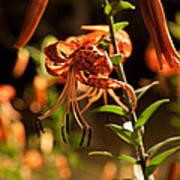 Night Bloom II Poster