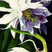 Night Blooming Cereus Poster