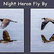 Night Heron Poster