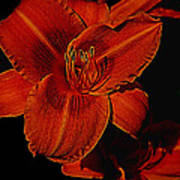 Night Time Lilly Poster