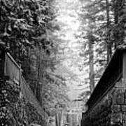 Nikko Pathway And Fog Poster