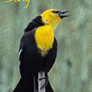 Yellow-headed Blackbird Singing Poster