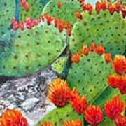 Nopal With Red Flowers  Poster by Nora Vega
