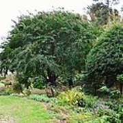Norfolk Botanical Gardens 10 Poster