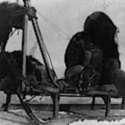 North Pole Sewing, C1909 Poster