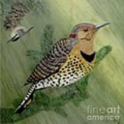 Northern Flicker And Red-breasted Nuthatch Poster