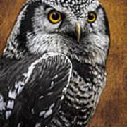 Northern Hawk Owl Poster