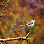 Northern Mockingbird Poster