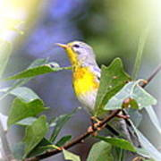Northern Parula 9309-005 Poster