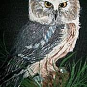 Northern Saw-whet Owl Poster by Sharon Duguay