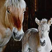 Norwegian Fjord Horse And Colt Digital Art Poster