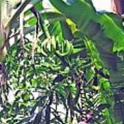 Nosy Komba Banana Palm Poster