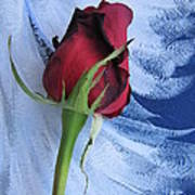 Not Just Another Rose Photograph Art Poster