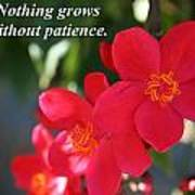Nothing Grows Without Patience Poster