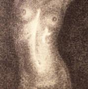 Nude Female Torso Drawings 5 Poster