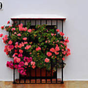 Number 9 - Geraniums In The Window Poster