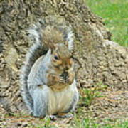Nut Break For Chubber Poster