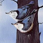 Nuthatch Pair Poster