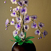 Nylon Stocking Orchid Poster