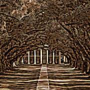 Oak Alley Bw Poster by Steve Harrington
