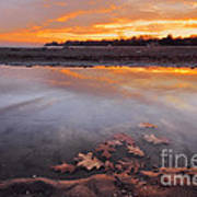 Oak Leaf And Beach Sunset Poster