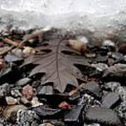 Oak Leaf On A Winter's Day Poster by Steven Valkenberg
