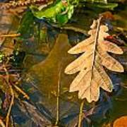 Oak Leaves In A Puddle Poster
