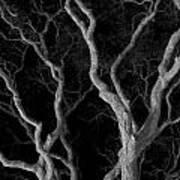Oak Tree Canopy Under A Night Sky Poster
