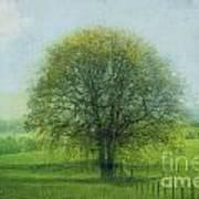 Oak Tree In Spring Poster
