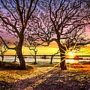 Oak Trees At Sunrise Poster
