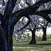 Oak Veiling Poster