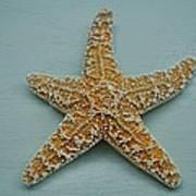 Ocean Star Fish Poster