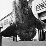 Ocean Sunfish Mola Mola  Monterey 1946 Poster