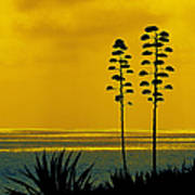 Ocean Sunset With Agave Silhouette Poster