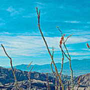 Ocotillo At Top Of Ladder Canyon With Salton Sea In Distance In Mecca Hills-ca Poster