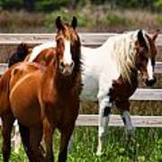 Ocracoke Ponies Poster