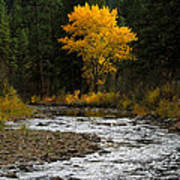 October Beauty Along Grimes Creek Poster