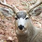 October Deer Poster