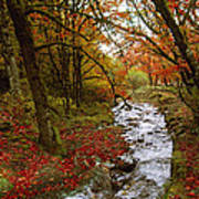 October In Oregon Poster
