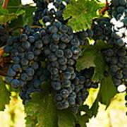 October Vintage Bonair Winery  Poster
