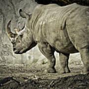 Odd-toed Rhino Poster