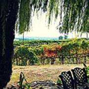 Off Into The Horizon Wine Country Views Poster