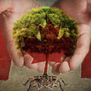 Oh Canada  Poster