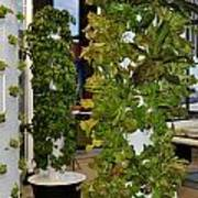 O'hare Airport Hydroponic Garden Poster