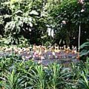 Oil Painting - A Number Of Flamingos Surrounded By Greenery In Their Enclosure  Poster