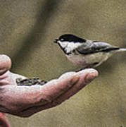 Oil Painting Black-capped Chickadee  Poster