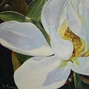 Oil Painting - Sydney's Magnolia Poster