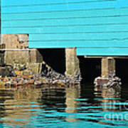 Old Aqua Boat Shed With Aqua Reflections Poster