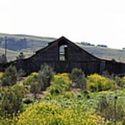 Old Barn In Sonoma California 5d22235 Poster by Wingsdomain Art and Photography